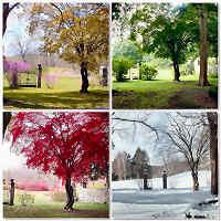 tarocchi gratis : metodo delle stagioni o di capodanno